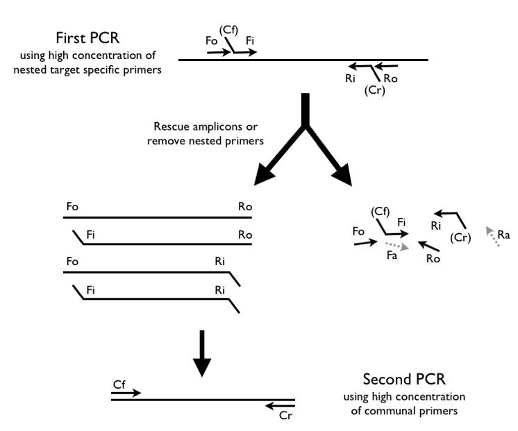 arm-PCR